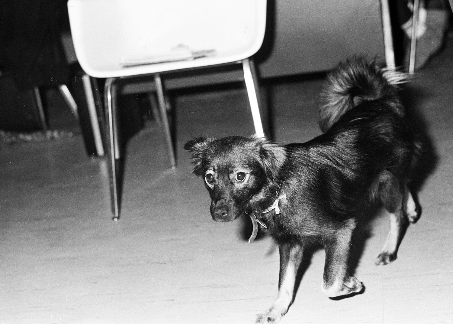 """A dog, the Innis """"mascot"""", patrolling the hall of the common room"""